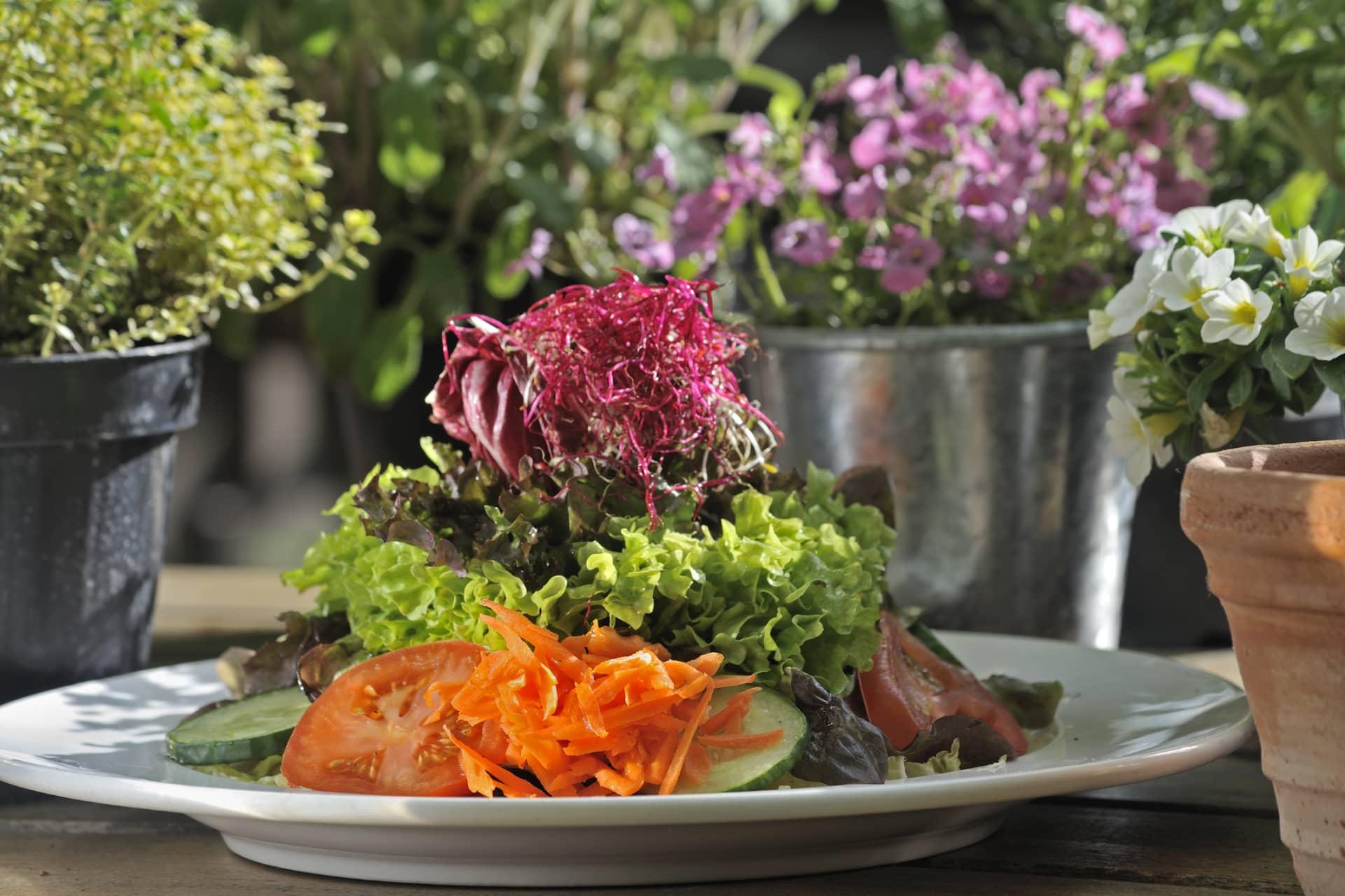 AUSZEIT Fasten - Fastenwandern, Buchingerfasten, Rohkostwandern - Frischkost Salatteller
